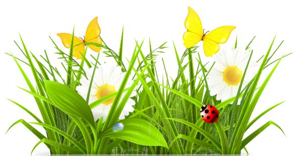 Healthy Yards + Gardens (1/6)